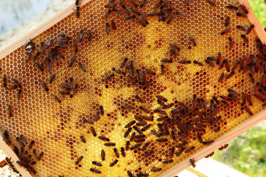 Bienen in einer wabe
